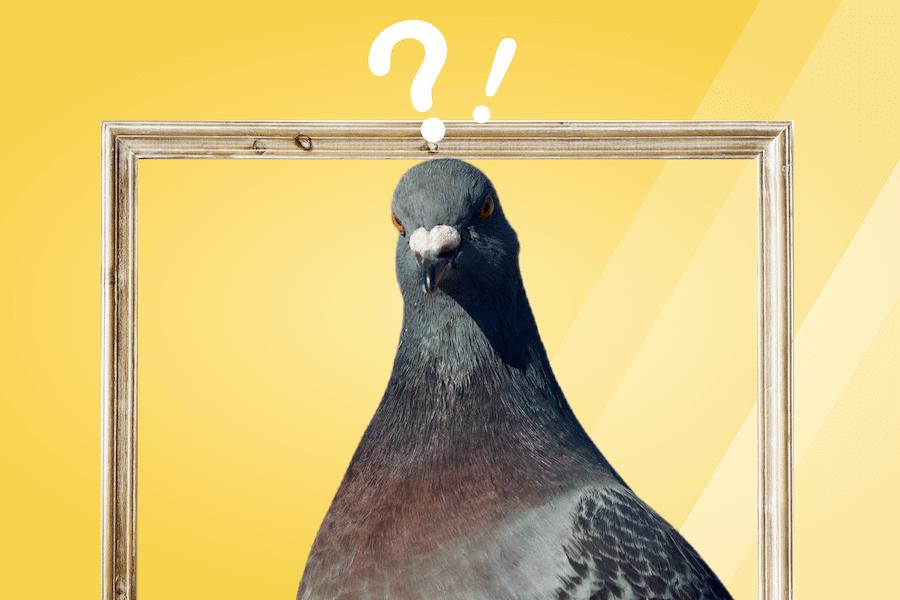 pigeon étonné créer un site internet